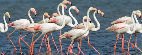 Observación de aves