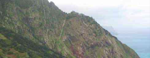 Boca do Risco - Espigao Amarelo