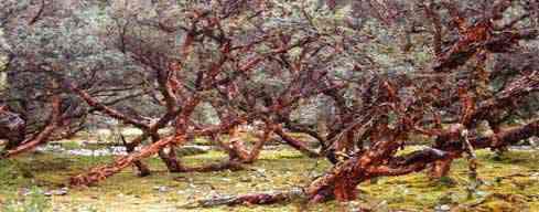 Llama Corral - Tahullipampa