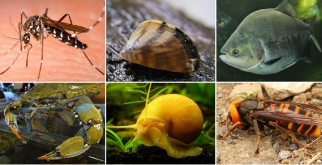 Las especies invasoras y el peligro para el medio ambiente