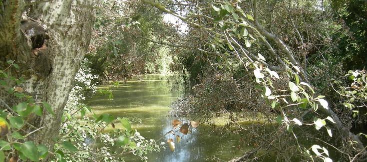 Segura y Guadiamar, dos ríos que renacen