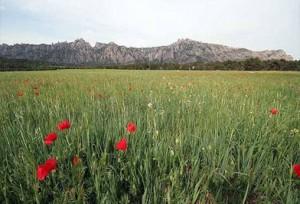 Vuelta a la Montaña de Montserrat