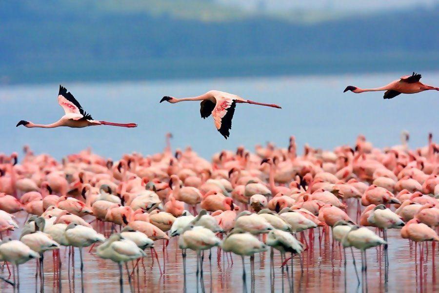 Observación de aves en el Delta del Ebro