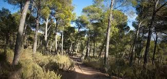 Alquerías (Sierra Espuña)