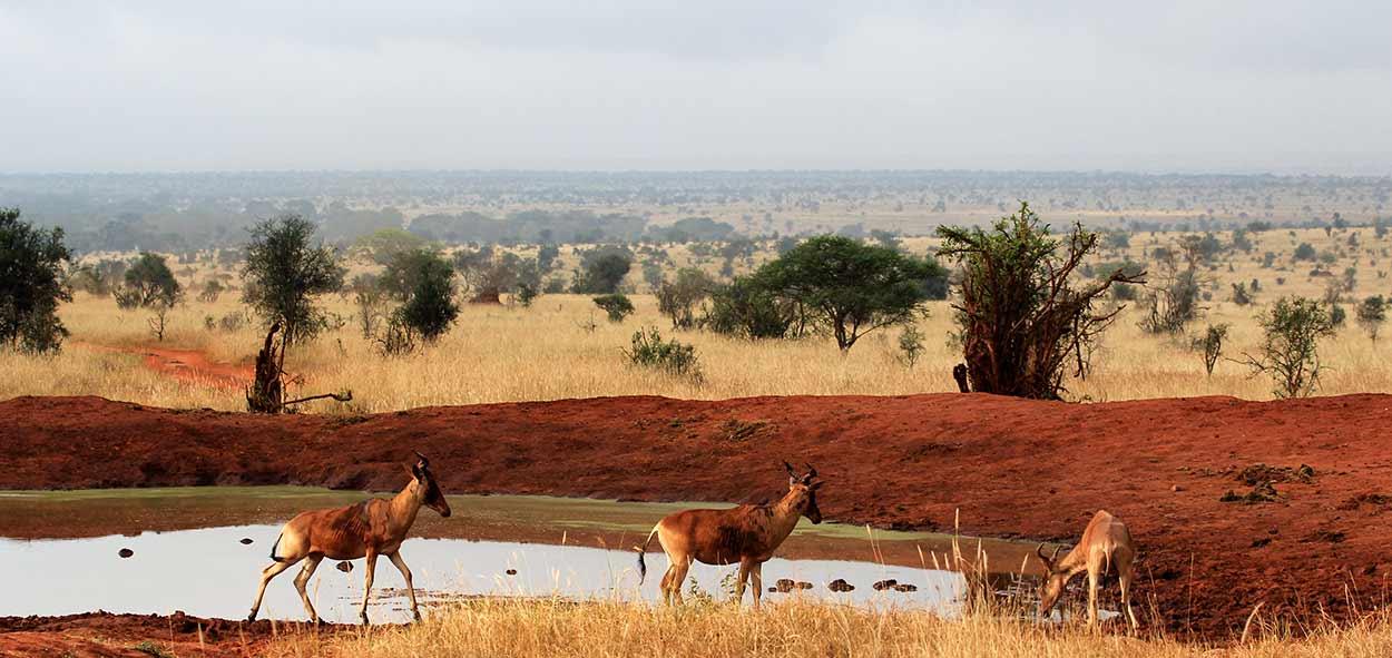 De safari por Kenia y Tanzania