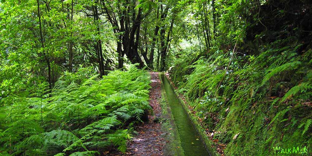 Las Levadas de Madeira