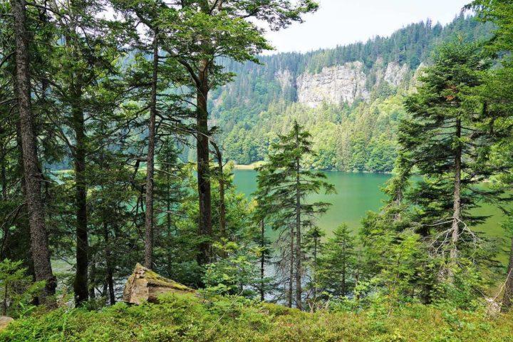 La Selva Negra en Alemania