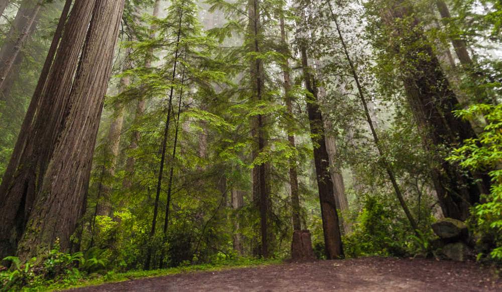 Todo lo que debes saber antes de visitar Yosemite